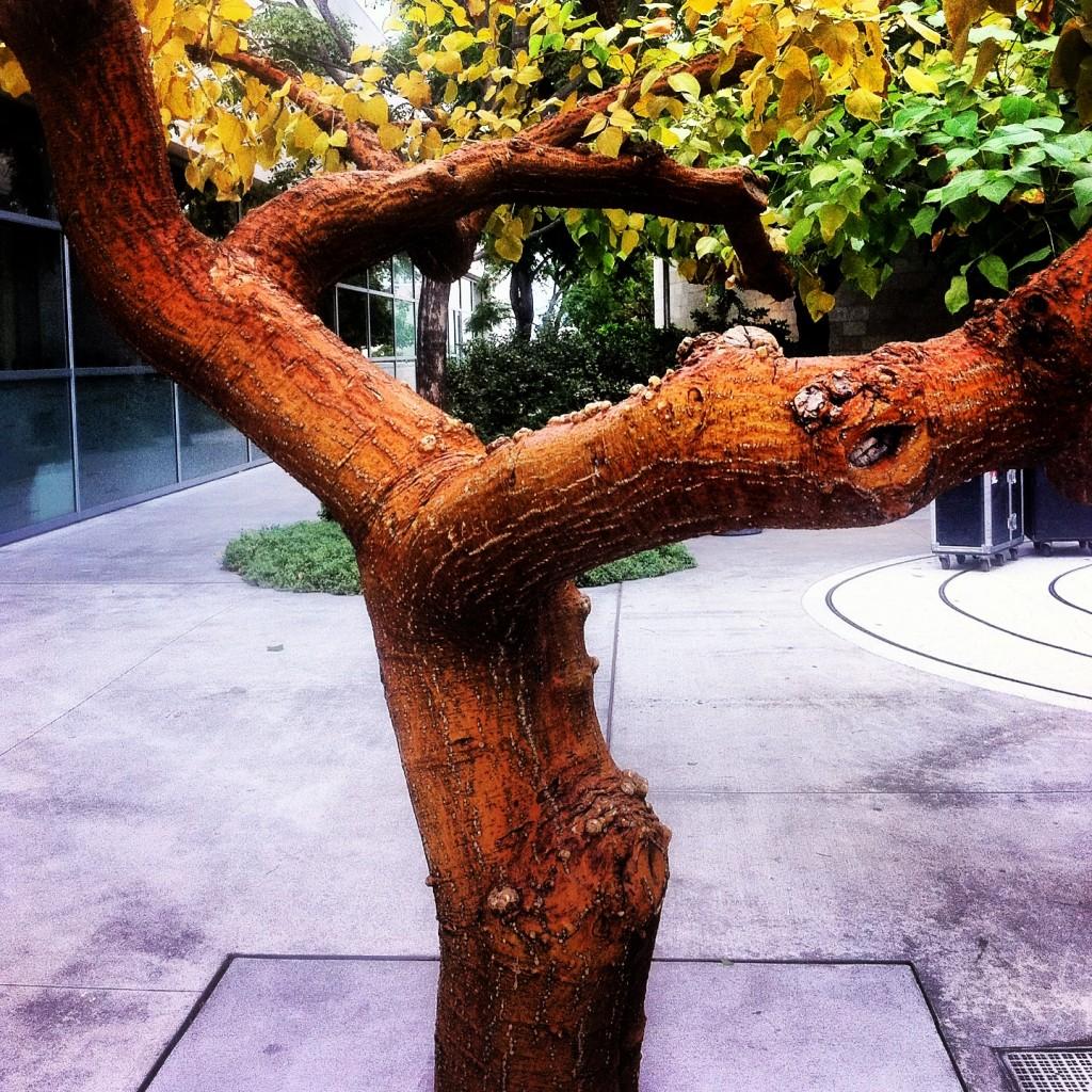 Tree me right